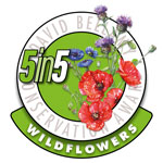 5 In 5 Wildflowers